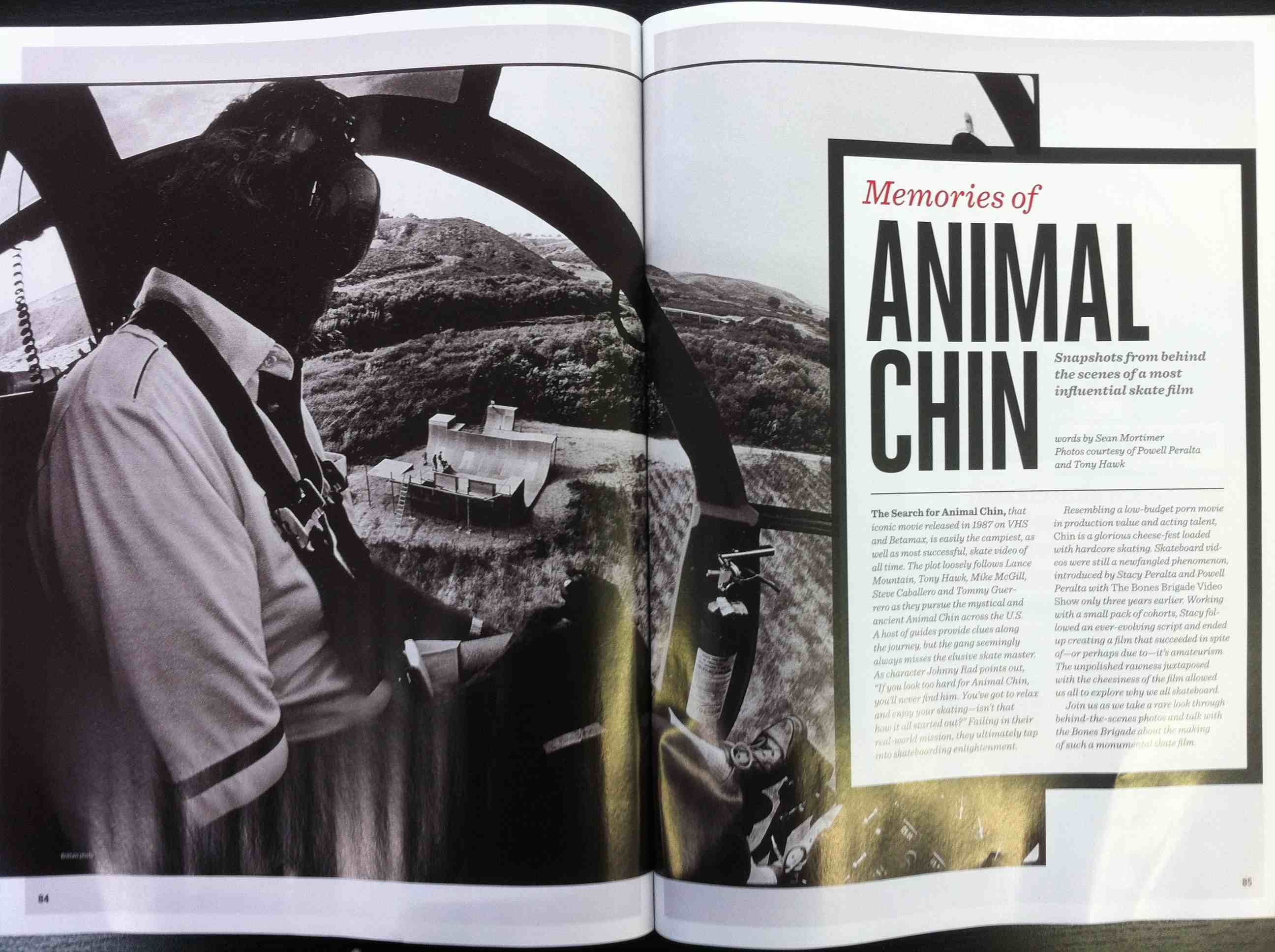animal chin article